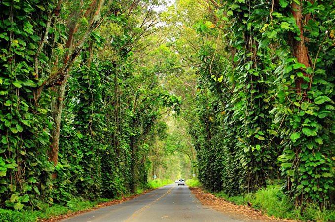 Tree Tunnel, Kauai