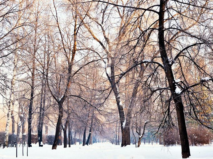 Winter in the local park \/ Novosibirsk \/ Siberia \/ 09.12.2011