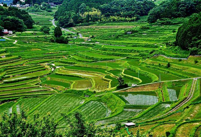 Tanada (Rice Field)